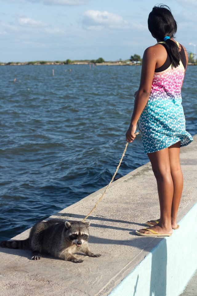 I was lucky to find a girl with a Raccoon pet in Belize City.